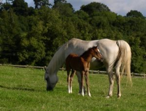 a mare and a foal