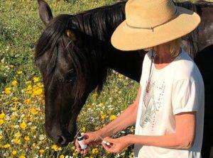 Aromatic Animal Wellness Course