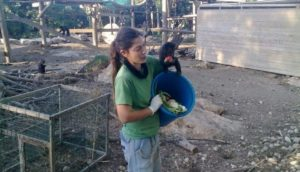 Monkey climbs on Michali's shoulder as she feeds them from a bucket