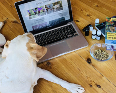 An introduction to essential oils for animals