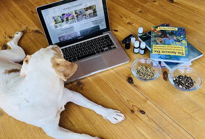 dog-learns-computer