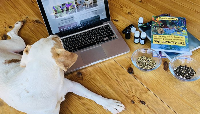 Learn animal aromatherapy on line