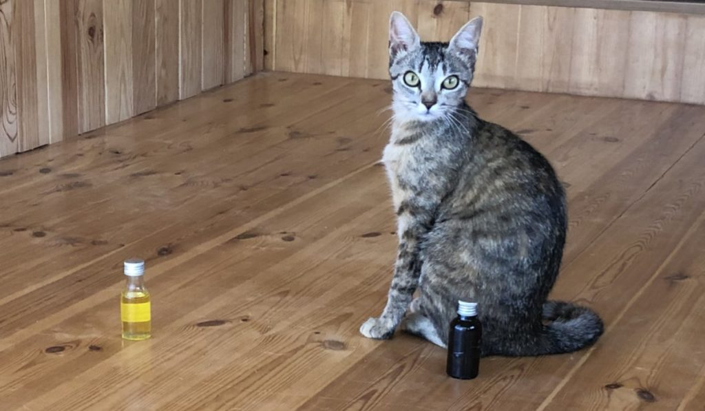 Cat-essential-oil-selection