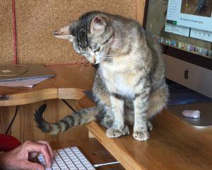 Animal PsychAromatica Intensive Online